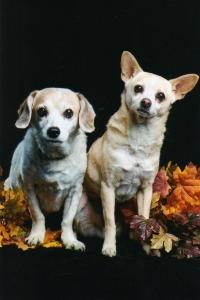 Daisy & Peanut